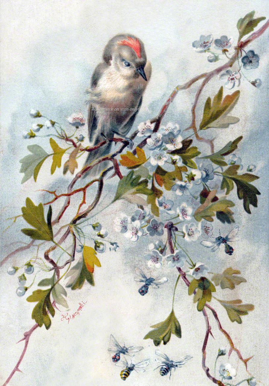 Bird Greeting Card Katydids Cards